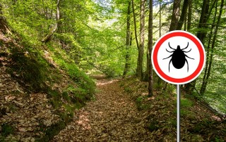 A hiking trial with a tick notice sign